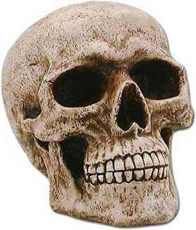"This life size human skull is actually a secret hiding place to ""bank"" your coins! The slot in back is virtually unnoticeable when placed upon a shelf or in a corner."